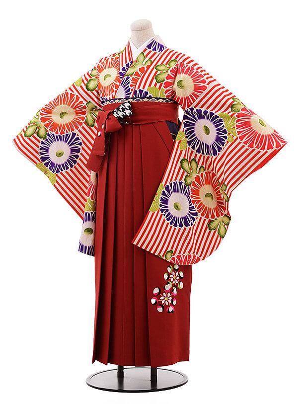 卒業袴レンタル h083 紅一点×EMMA 赤ストライプ×エンジ色