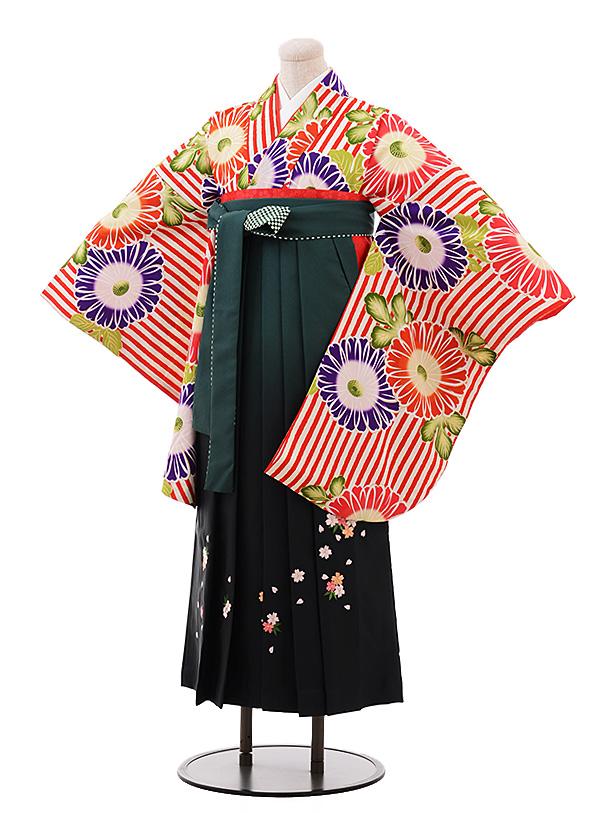 卒業袴レンタル h186 紅一点(着物のみ) 赤ストライプ花×緑ぼかし袴