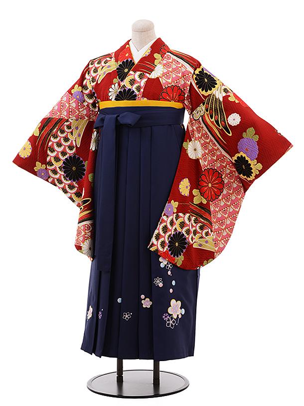 【ふくよかサイズ】卒業袴レンタル h196 赤地 菊 古典×紺袴