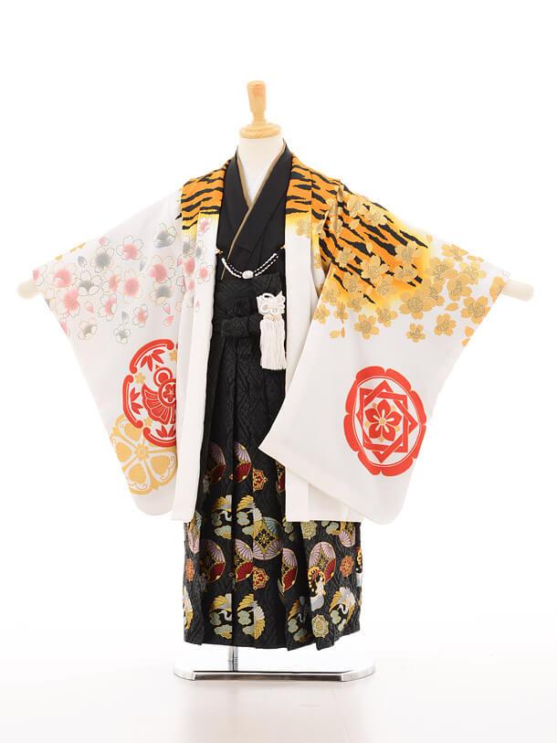 かんたん753レンタル(5歳男の子袴)5119花わらべ虎に桜×黒地古典柄袴
