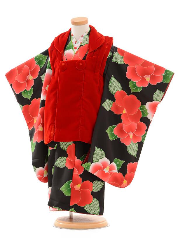 七五三レンタル(3歳女の子被布)3169赤ベルベット×黒椿