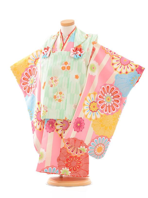 七五三レンタル(3歳女の子被布)3170花わらべ縞に紋菊/ピ
