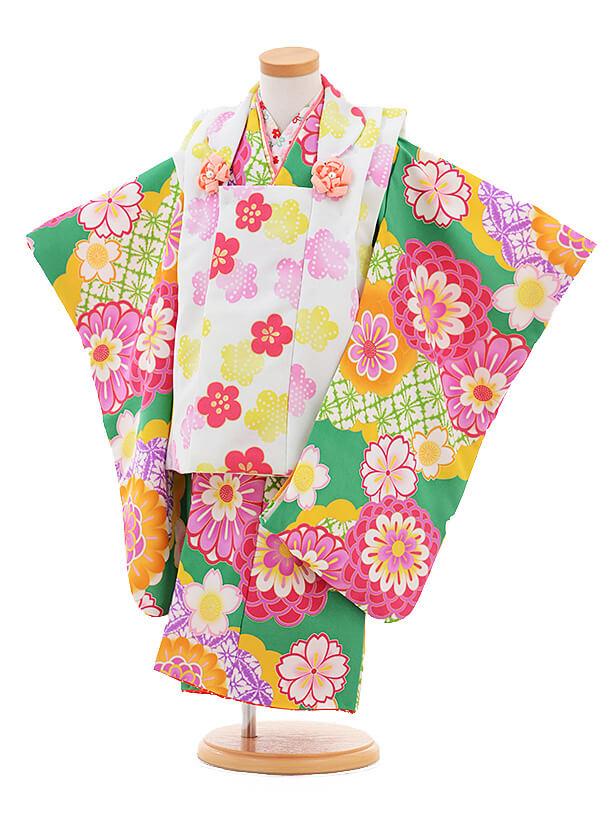 七五三レンタル(3歳女の子被布)3278花わらべ水色×グリーン梅菊