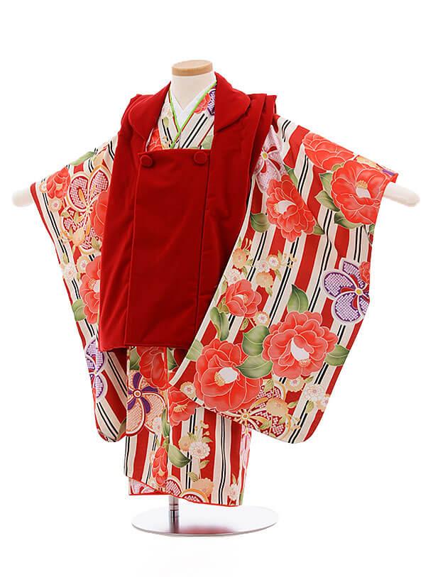 七五三レンタル(3歳女被布)3445 赤ベルベッド×赤ストライプ 椿