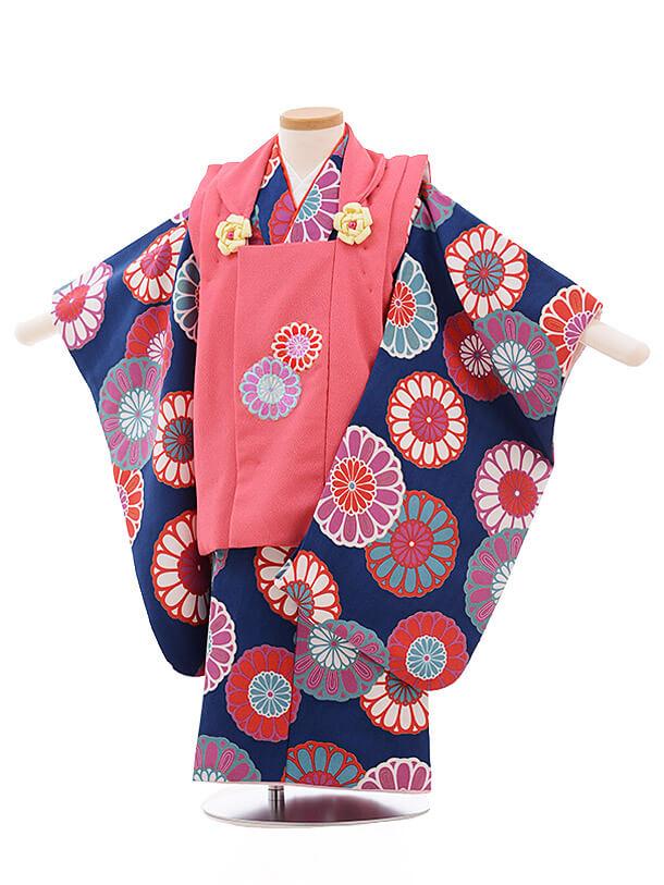 七五三レンタル(3歳女被布)3491 ピンク×紺地 菊