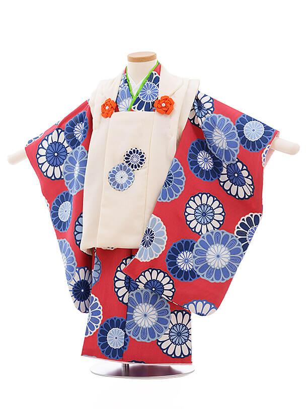 七五三レンタル(3歳女被布)3492 白×ボルドー地 菊