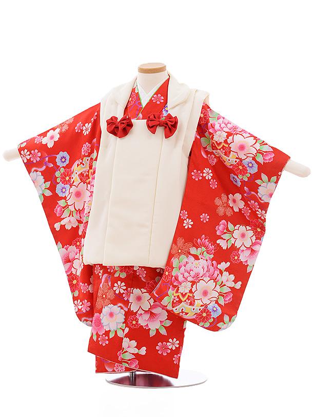 七五三レンタル(3歳女児被布)3557 白×赤地 桜菊