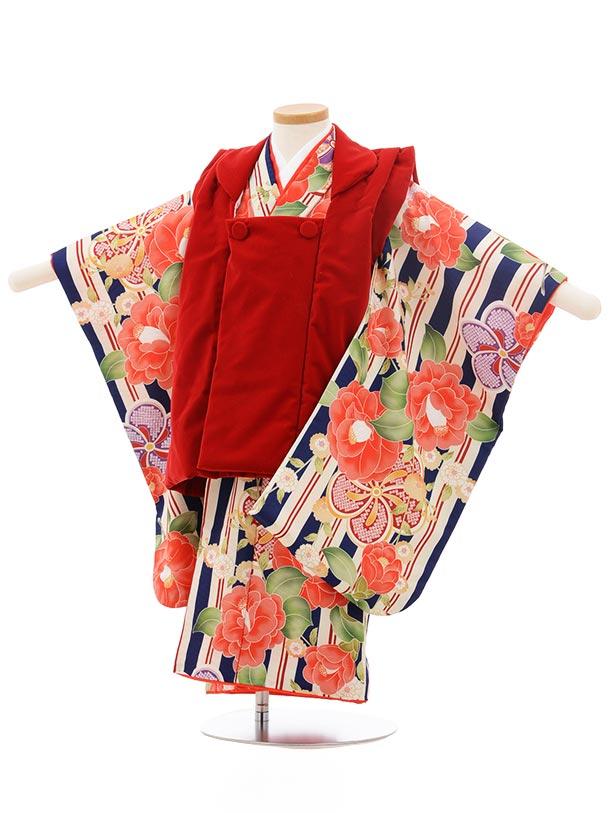 七五三レンタル(3歳女の子被布)3741 赤 ベルベット×紺 ストライプ椿