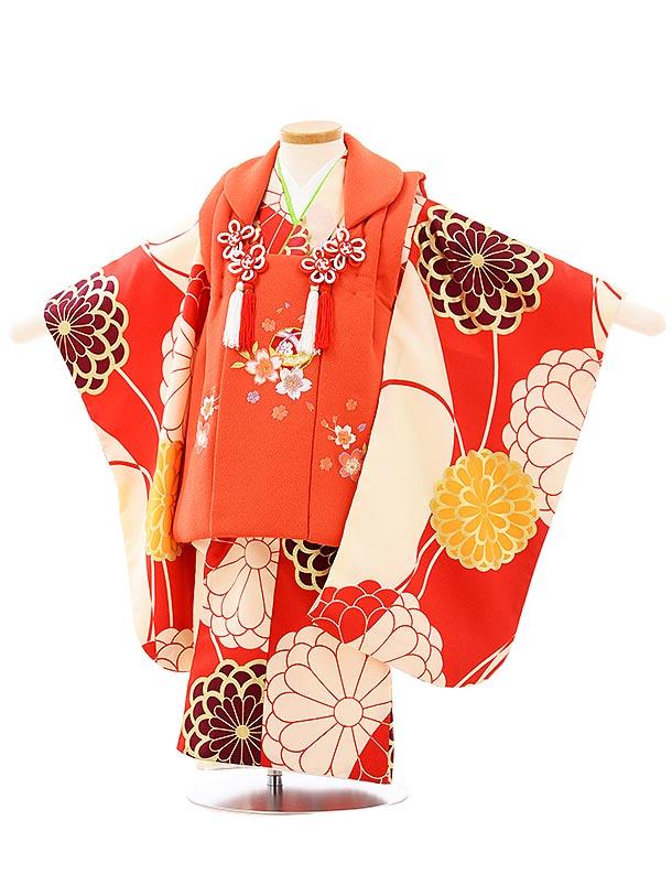 七五三レンタル(3歳女児被布)3931オレンジ刺繍桜x赤地菊