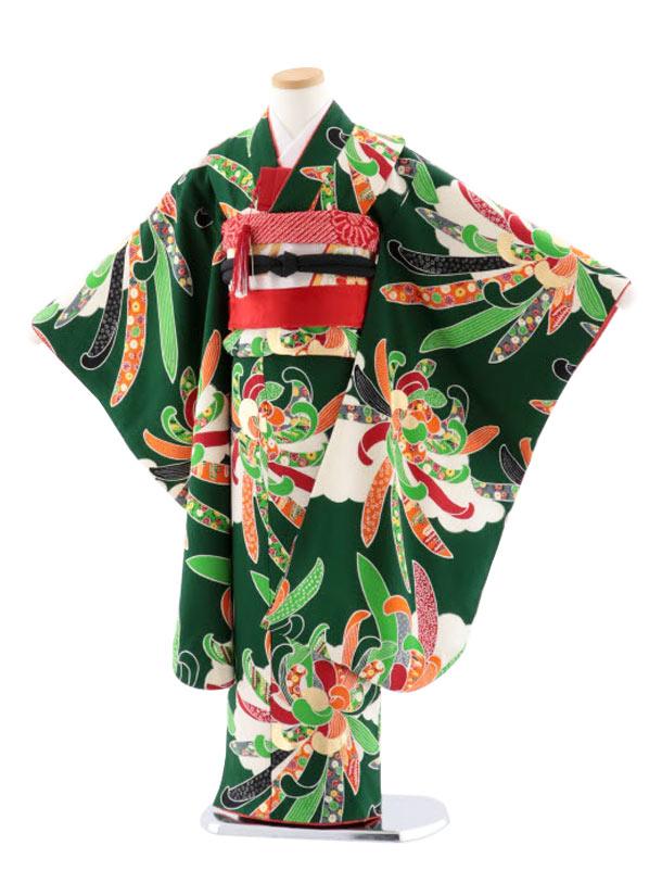 七五三(7歳女児袋帯) 正絹 7743 紅一点 グリーン地 菊 大輪