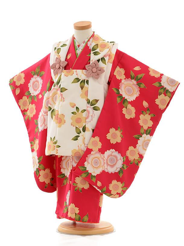 七五三レンタル(3女被布)D069 白桜×紅色