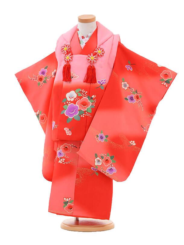 七五三(3歳女被布)H007ピンク赤ぼかし×赤椿