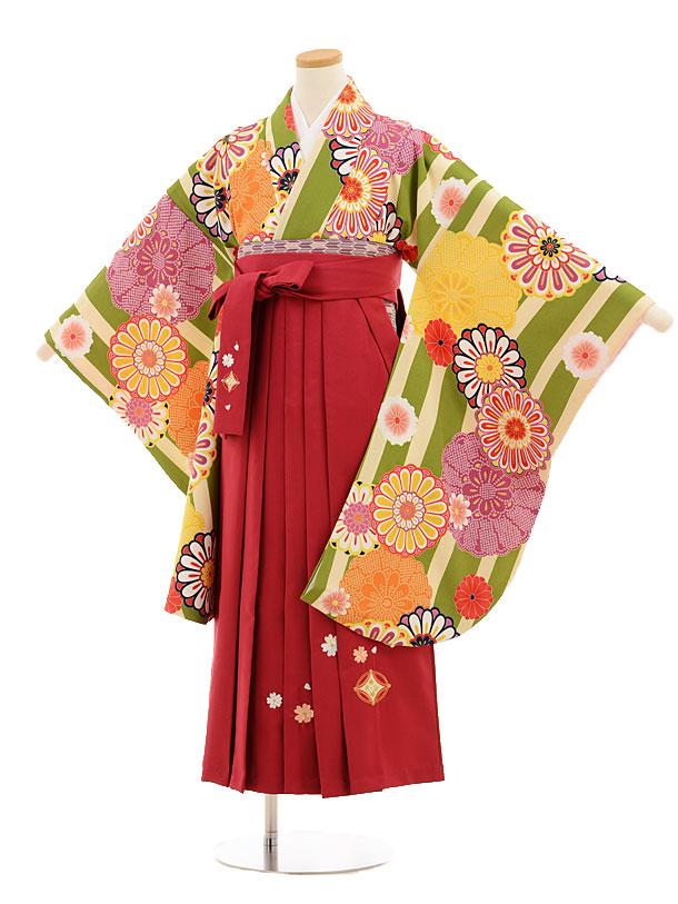 小学生卒業式袴レンタル(女の子)9527 クリームグリーン縞菊×ローズ袴