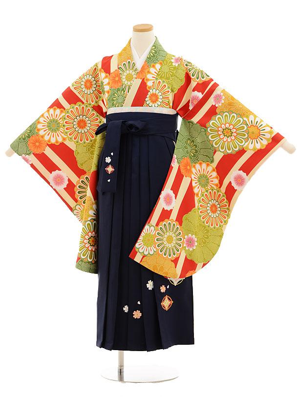 小学生卒業式袴レンタル(女の子)9528 赤クリーム縞菊×紺袴