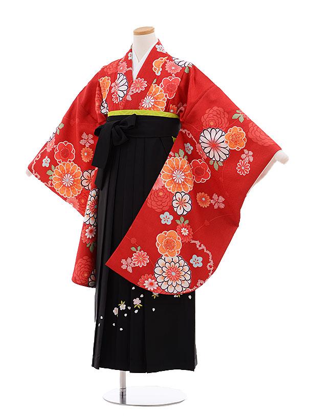 小学生卒業式袴レンタル(女の子)9667赤菊梅×黒袴