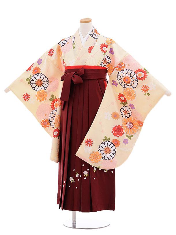 小学生卒業式袴レンタル(女の子)9674クリーム色菊梅×エンジ袴