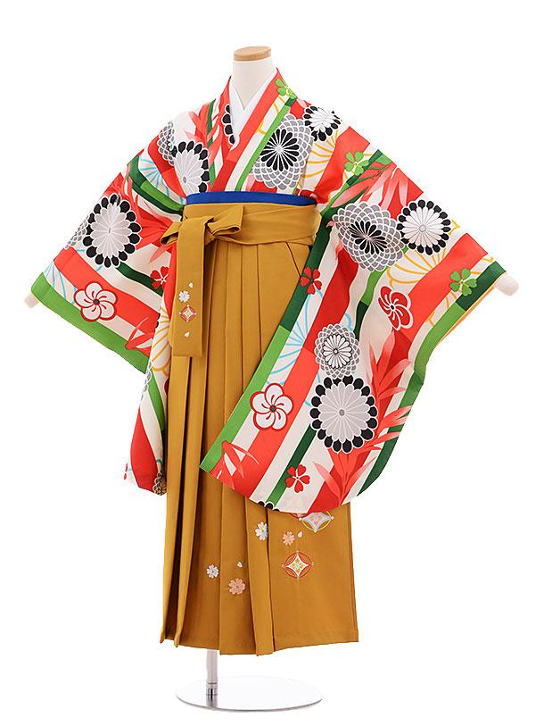 小学生卒業式袴レンタル(女の子)9689白地赤ストライプ菊×金茶袴