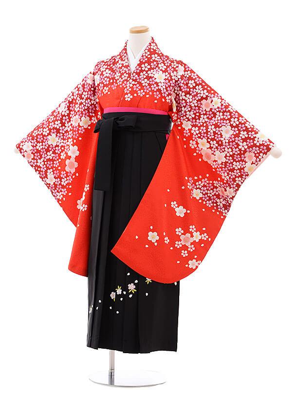 小学生卒業式袴レンタル(女の子)9766 赤地桜×黒袴