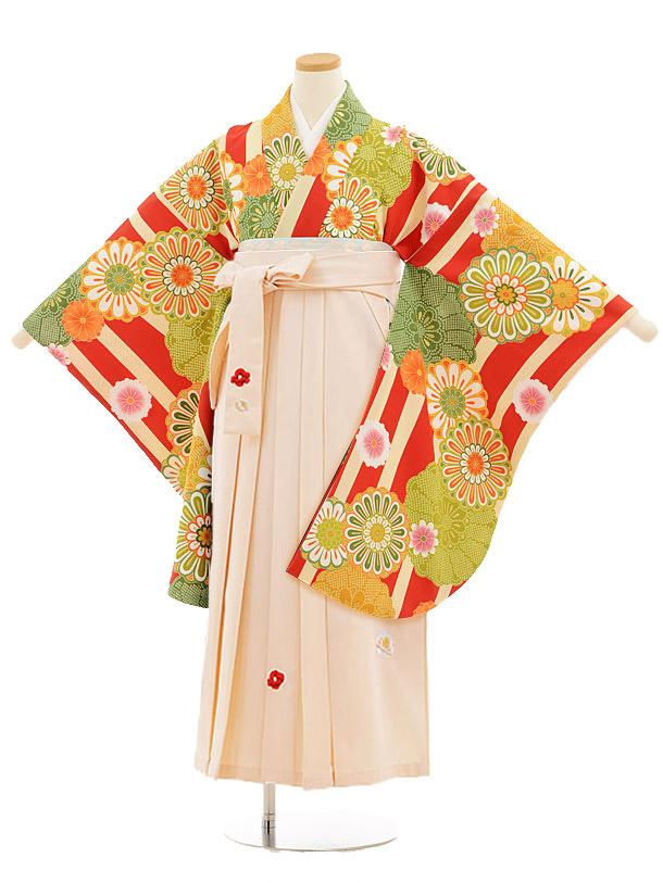 小学生卒業式袴レンタル(女の子)9815 赤クリーム縞菊×アイボリー袴