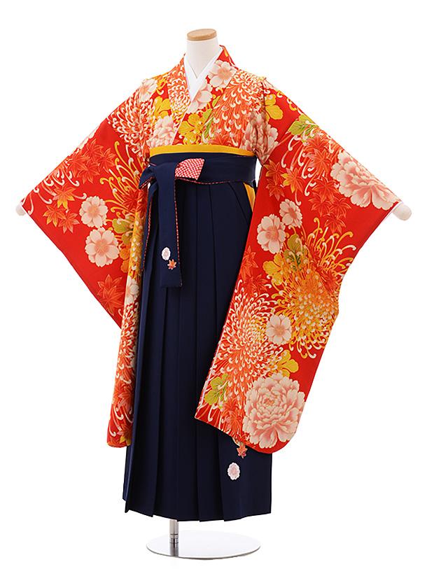 小学生卒業袴(女児)Z060ちはやふる×JAPANSTYLE 赤乱菊×紺袴