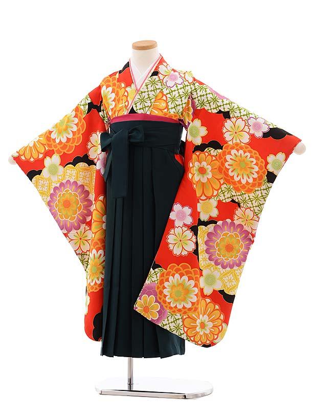女児袴レンタル(7歳)7775 花わらべ 雲取 菊×グリーン袴